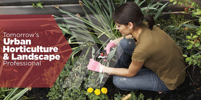 Urban Horticulture and Landscape Professionals in Aurora, CO